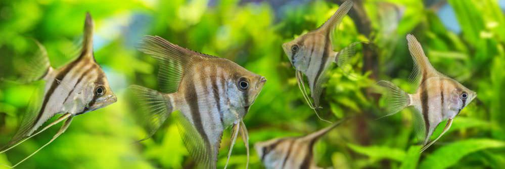 anglefish.jpg