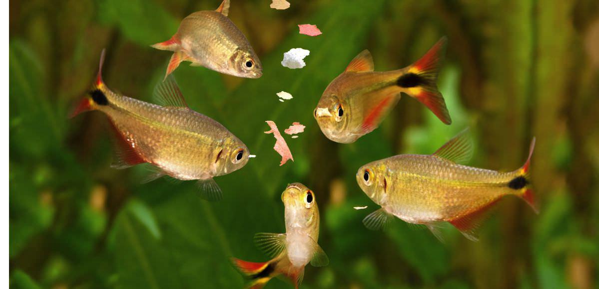 aquarium-feeding.jpg