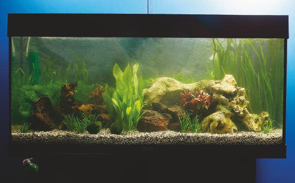 aquarium10.jpg
