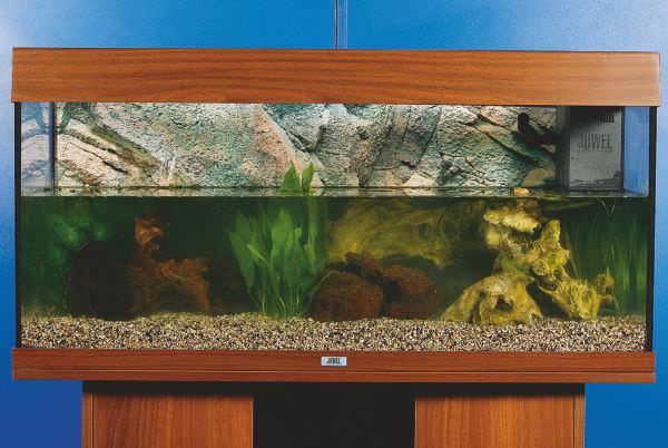 aquarium8.jpg
