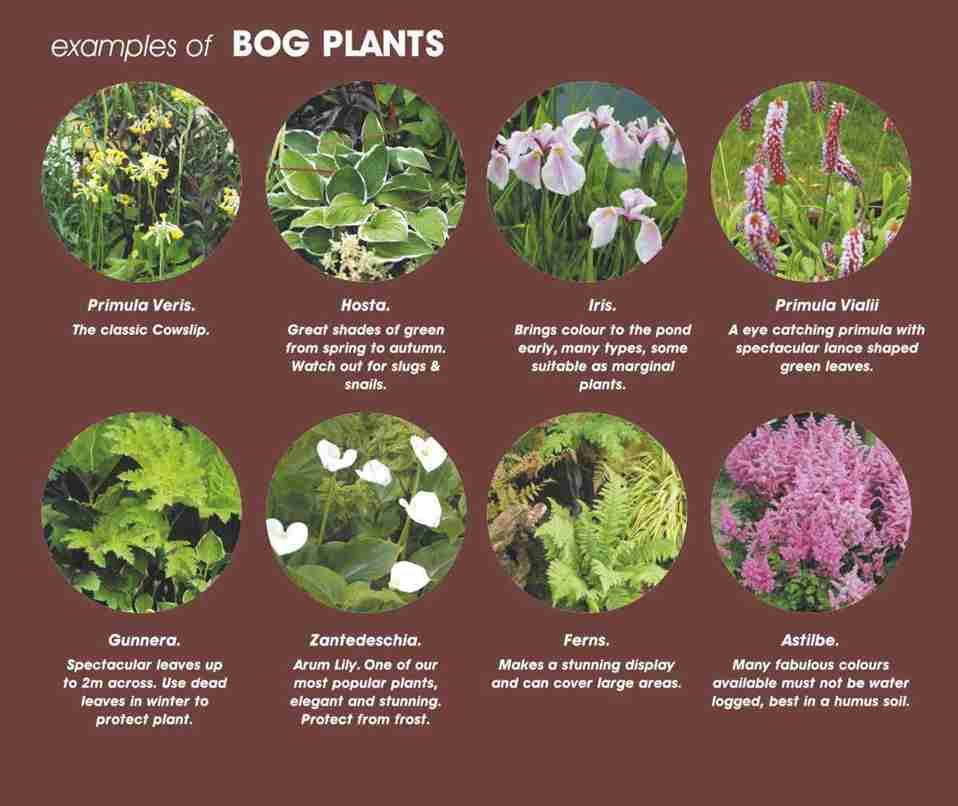 Bog And Marsh Plants