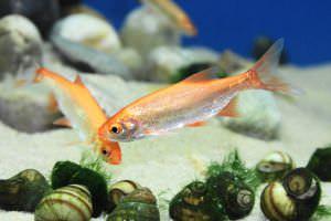 Pond fish varieties for Teichfische nrw