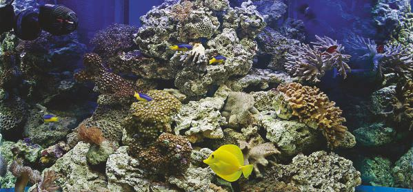 marine-aquarium-set-up-9.jpg