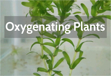 oxygenating-plants.png