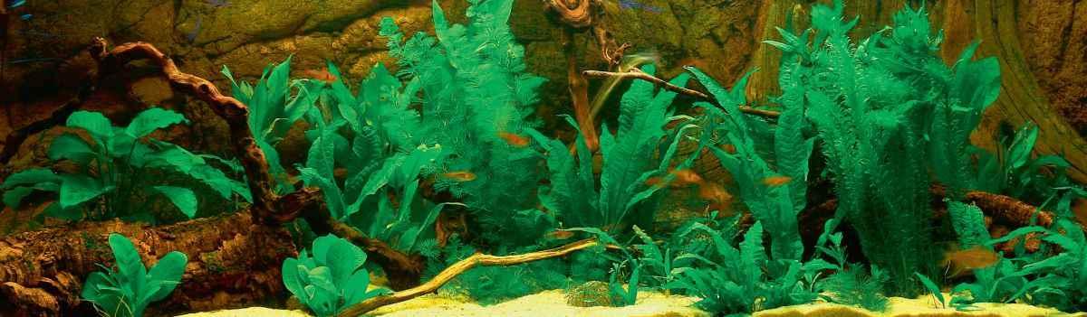 planted-aquarium.jpg