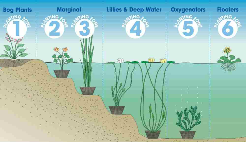List of synonyms and antonyms of the word oxygenating for Oxygenating plants for a small pond