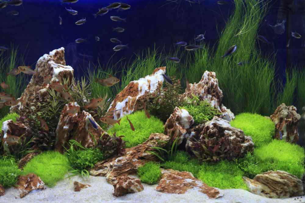 Rock Aquascaping