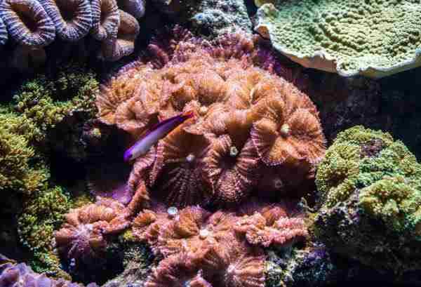 actinodiscus-discosoma.jpg