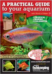 A Practical Guide to Your Aquarium
