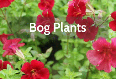 bog-plants.png