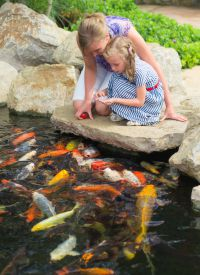 When to feed pond fish world of water aquatic centres for Koi pool water gardens blackpool