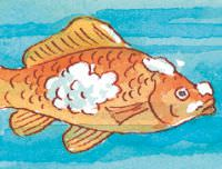 fish-fungus.jpg