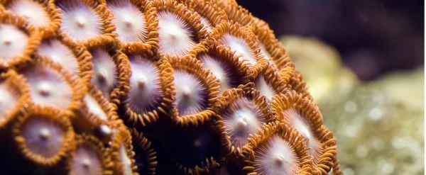 polyp-colony.jpg