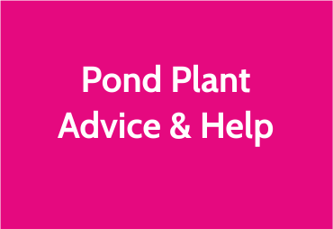 pond-plant-help.png