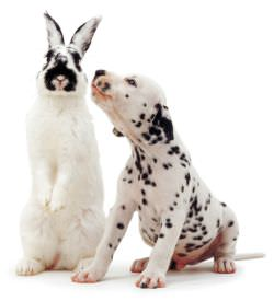 rabbit-dog-250.jpg